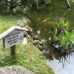 MBSR Mindful Meditation - Japanese Tea Garden